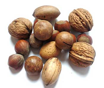 nut facts picture of mixed nuts, including walnut, almond,hazelnuts, brazil nuts all in the shell