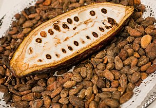 cocoa bean plant open with cocoa beans