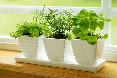 starting herb garden on windowsill