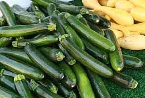 summer squash including yellow squash, zucchini,