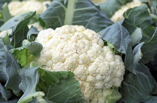 cauliflower growing