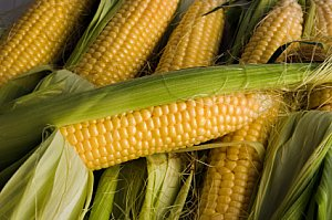 corn on the cob for kids cooking activities