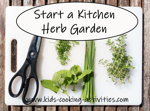 starting an herb garden