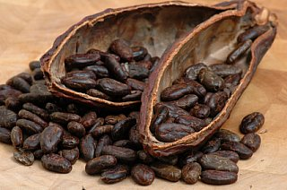 new roasted cocoa beans