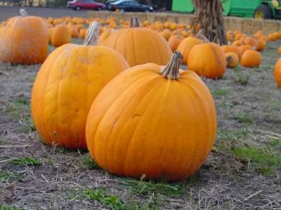 Pumpkin recipes for kids cooking activities