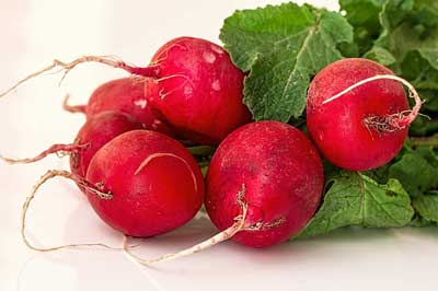 radish food facts, picture of a group of radishes