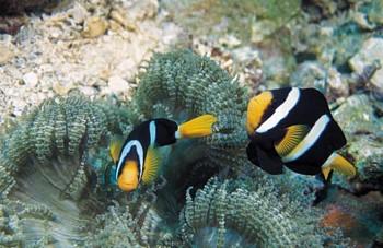 under the sea fish