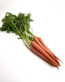 carrot food facts photo of a bundle of carrots with stems