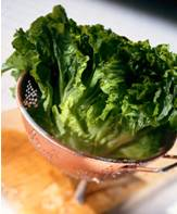 lettuce food facts photo of romaine lettuce in a colander