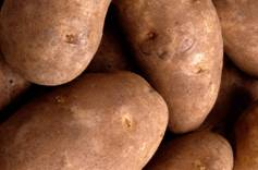 potato food facts, picture of potatoes
