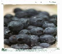 berry facts picture of blueberries
