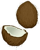 coconut food facts photo of coconut cut in half