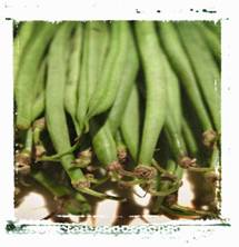 green beans facts bunch of fresh green beans